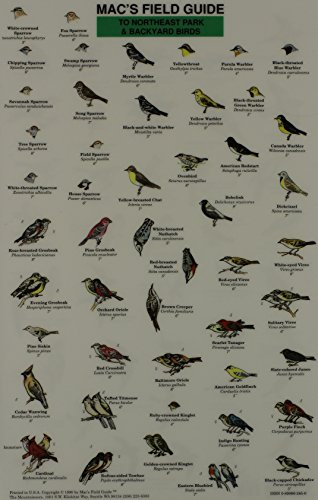 Northeast Park and Backyard Birds (Mac's Guides (Paperback))