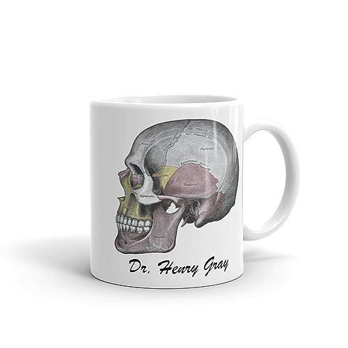 Amazon.com: Gray\'s Anatomy Skull | Neurology Neurosurgery ...