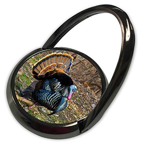 3dRose Danita Delimont - Turkeys - USA, Minnesota, Mendota Heights, Wild Turkey, Displaying - Phone Ring (phr_314870_1)