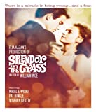 Splendor In The Grass poster thumbnail