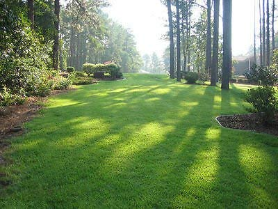 Zenith Zoysia Grass Seed 100% Pure 1/2 Lb. (Plants - 500 Sq.ft.) by SeedRanch