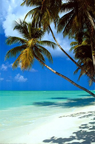Tropical Beach Poster 24 x 36in