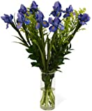 KaBloom New Baby Boy Bouquet of Blue Iris and White Aster - With Vase