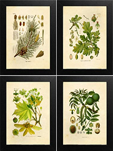 Ink Tree - Ink Inc. Classic Common Trees Botanical Prints Vintage Wall Art Drawing, Set of 4, 8x10, Unframed