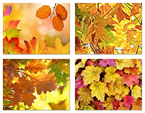Four Seasons Note Cards - Fall Leaves Blank Note Cards - 12 Pack - Greeting Cards with Envelopes - 4 Unique Designs - 5.5