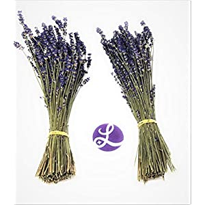 "Findlavender - Royal Velvet Lavender Bundles - 14"" - 16"" Long - Can Be Used for Any Ocassion - Perfect for Your Wedding! - 2 Bundles 38"