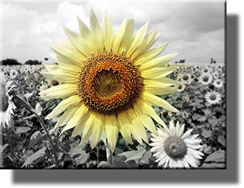 Picture Sunflower (Big Sunflower on Farm Picture on Stretched Canvas, Wall Art Décor, Ready to Hang!)