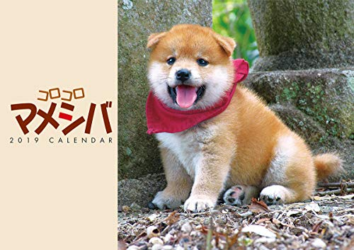 JAPAN IMPORT :: Tri-x corocoro mameshiba 2019 public holidays amendment tagged calendar CL-361 wall-51 x 36 cm mameshiba beans Shiba puppies ()
