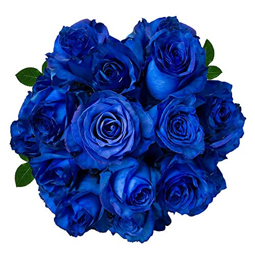 Blue| 25 stems (Neptune Rose) Magnaflor - XXL Blooms| Bunch| 10-12 days vase Life ()
