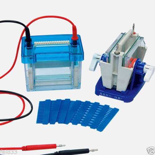 - DYCZ-24DN Lab Mini Modular Dual Vertical Gel Electrophoresis Cell System 82 x 82 mm For SDS - PAGE Protein Electrophoresis
