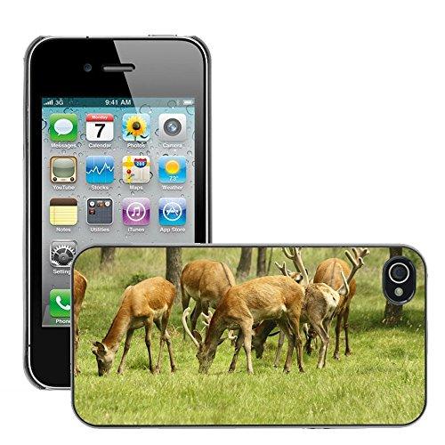 Bild Hart Handy Schwarz Schutz Case Cover Schale Etui // M00135081 Deer Natur Wilde Tiere // Apple iPhone 4 4S 4G