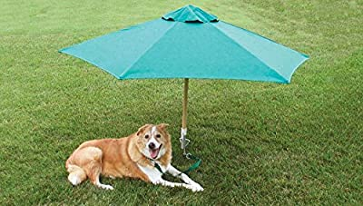 """Dog Yard Tie Out Not Just for Dogs but Cats and Any Other Pet That Need Exercise and Fresh Air. This 14"""" Rust-proof Spiral Yard Stake Will Allow Your Pet to Enjoy the Outdoors and Play on the Lawn and in the Yard When You Don't Have a Fence At Home."""