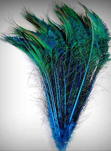 1 Packet of 100 Pcs Dyed Peacock Swords - Turquoise 10-15