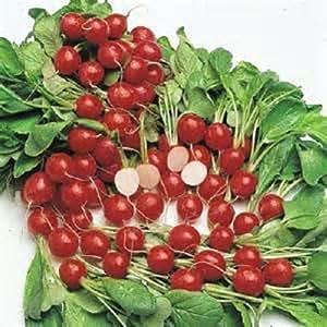 100 Cherry Belle Radish Seeds New seeds for 2017 season Heirloom Seeds