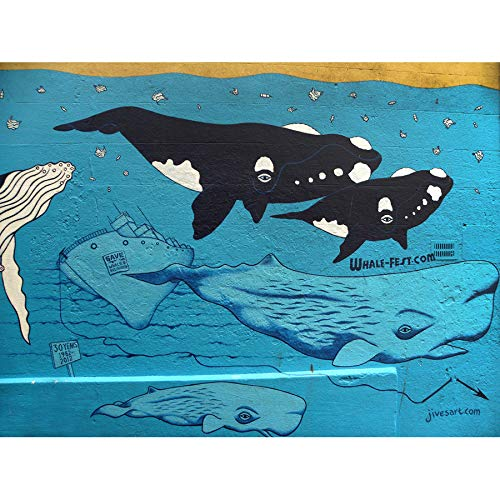 - PHOTOGRAPHY GRAFFITI MURAL STREET WALL ORCA WHALE SHIP 18X24'' POSTER ART PRINT LV10861