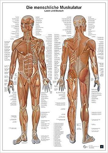Die menschliche Muskulatur: Anatomie-Lerntafel: Amazon.de: Unknown ...