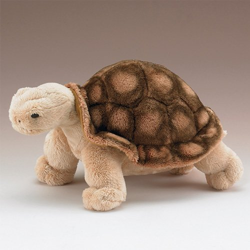 Wildlife Artists Tortoise 10
