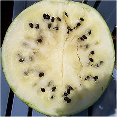 Package of 25 Seeds, Cream of Saskatchewan Watermelon (Citrullus lanatus) Non-GMO Seeds By Seed Needs