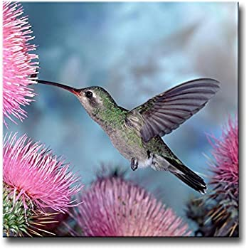 Amazon Com Feeding Hummingbird Oil Painting On Canvas