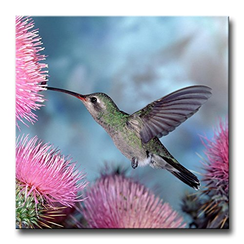 So Crazy Art Pink Wall Art Painting Hummingbird In Pink Water Prints On Canvas The Picture Animal Pictures Oil For Home Modern Decoration Print Decor (Wall Hanging Hummingbird)