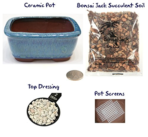 Succulent Potting Kit(4 inch). Ceramic Bonsai Clay Pot, Soil, Screen and Top Dressing. Multiple Color Choices - Ocean Blue