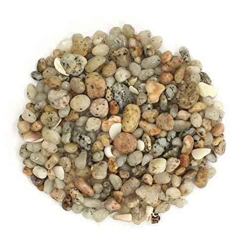 Natural Sea Coral Mix Pebbles - (2 Pounds) Size 1/5