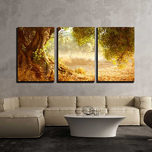 vas Wall Art - Old Olive Tree - Modern Home Decor Stretched and Framed Ready to Hang - 24