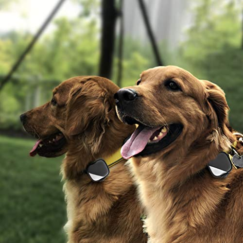 GPS Dog Tracker For 2 Dogs Real Time Tracking Collar APP Control Activity Monitor For Dogs Pets (2 Tracker) (Best Gps Navigation App)