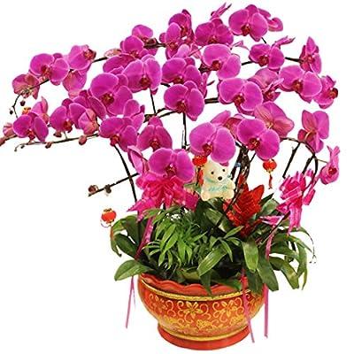 20/50Pcs Sweet William Dianthus Flower Seeds Bonsai Flowers Garden Plants