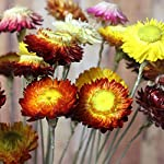10PCS-Artificial-Dried-Daisy-Floral-Decor-BouquetColorful-Chrysanthemum-ArrangementBouquet-Bride-Bridesmaid-Holding-Flowers-for-Home-Hotel-Office-Wedding-Party-Garden-Craft-Art-Decor