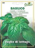 Basil Large leaf Herb Seeds (3500 - 4000 Seeds) Best Quality Very Fresh seeds