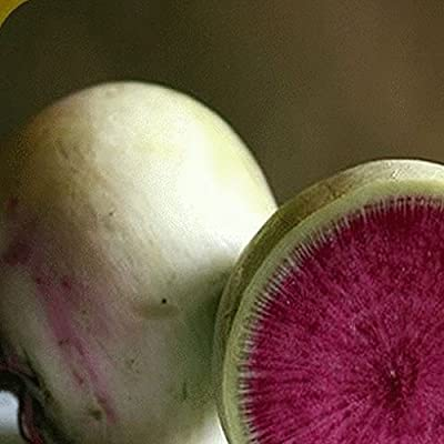 Everwilde Farms - Watermelon Radish Seeds - Gold Vault