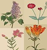 The Botanical Magazine - Illustrated Volumes 1-6