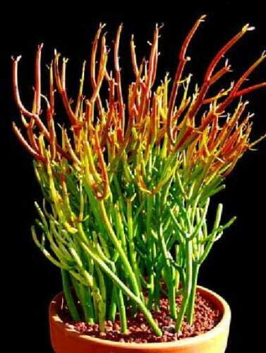 Amazon.com: Palillos de chimenea para plantas con forma de ...