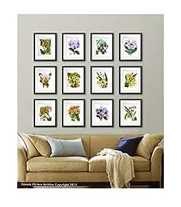 Tropical Decor Orchids Art Prints Set Of 12 Unframed Botanical Wall Decor Living