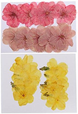 本物 桜の花 ウィンタージャスミンの花 乾いた花 押し花 ハウスデコレーション ジュエリー製作 20枚セット