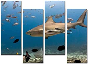 Wocatton Bull Shark Close up with Remora Fish at Ocean Bottom in Fiji Wall Art Background Decor Pictures Print On Canvas Art Stretched and Framed Perfect Home Decoration