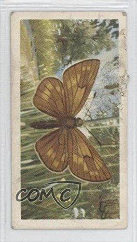 Silver-Spotted Skipper COMC REVIEWED Good to VG-EX (Trading Card) 1963 Brooke Bond British Butterflies - Tea [Base] #49