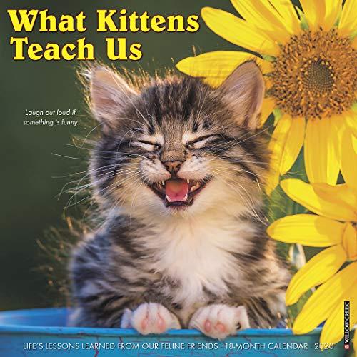 - What Kittens Teach Us 2020 Wall Calendar