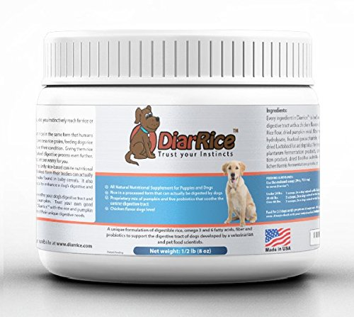 What Are The Best Probiotics For Dogs And Cats