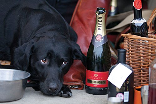 black-labrador-with-champagne-large-size-folding-greeting-card