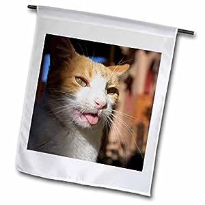 Danita Delimont - Cats - Male, Orange Tabby Cat, Morocco-AF29 MME0103 - Michele Molinari - 18 x 27 inch Garden Flag (fl_70987_2)