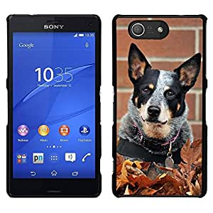 EJOY---Cubierta de la caja de protección para la piel dura ** Sony Xperia Z3 Compact ** --Rata Terrier Toy Fox Pequeño perro de la caída del otoño