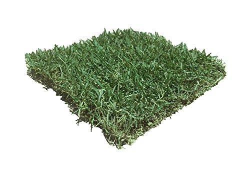 Zoysia Grass - 6