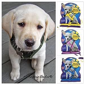 Neon Color Pequeño Pet Arnés Ajustable de plomo y perro Correa ...
