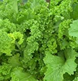 David's Garden Seeds Mustard Greens Southern Giant Curled D377 (Green) 500 Open Pollinated Seeds