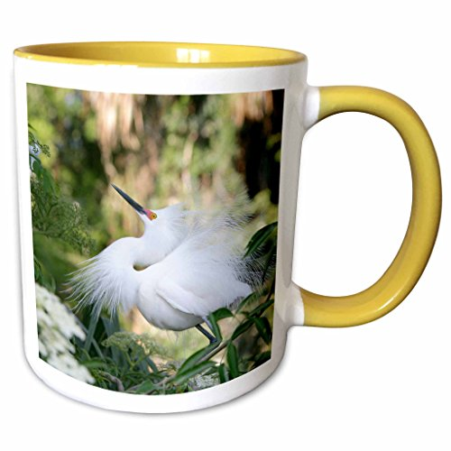 3dRose Danita Delimont - Birds - FL, St. Augustine Alligator Farm, snowy egret bird - US10 BJA0144 - Jaynes Gallery - 11oz Two-Tone Yellow Mug - Outlets Augustine Fl St