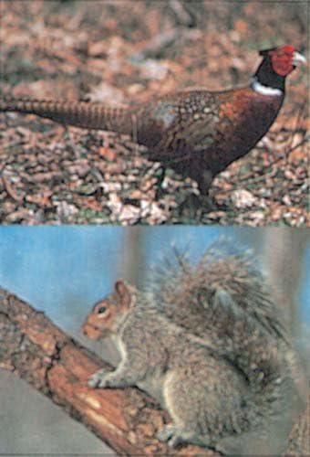 Pheasant//Squirrel Delta Tru-Life Paper Targets