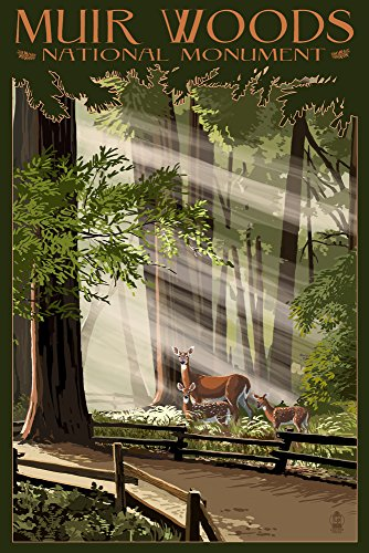 Muir Woods National Monument, California - Deer and Fawns (16x24 Giclee Gallery Print, Wall Decor Travel Poster)