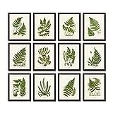 Vintage Ferns No. 35 Botanical Print Set of 12 Giclee Fine Art Prints - Unframed